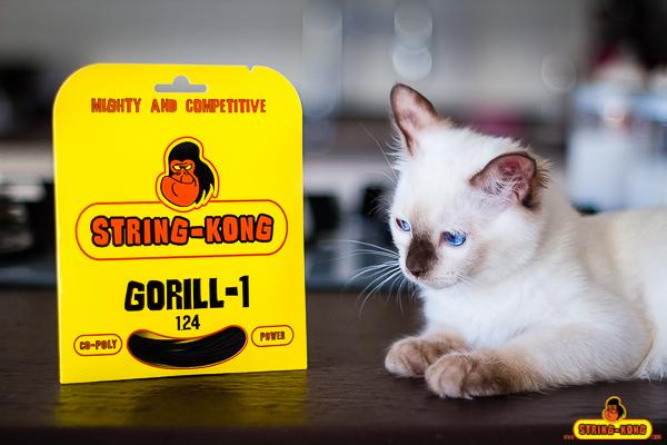 String-Kong-cat-be-curious